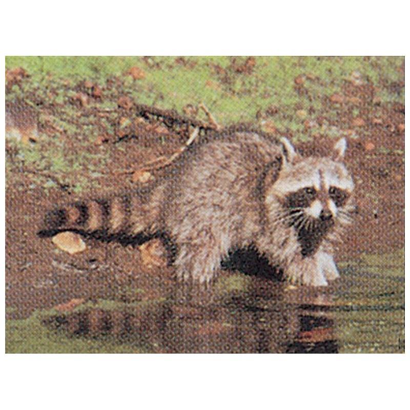 Target face Raccoon 52,50cm x 70cm