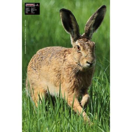 Hare Alert Maximal 40 x 60cm